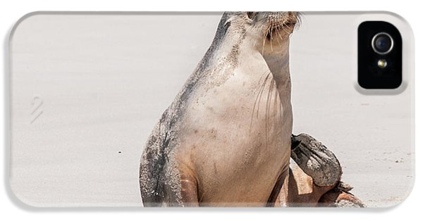 Sea Lion 1 IPhone 5 Case by Werner Padarin