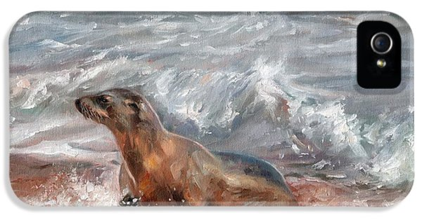 Sea Lion IPhone 5 / 5s Case by David Stribbling