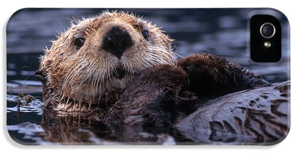 Sea Otter IPhone 5 Case by Yva Momatiuk and John Eastcott and Photo Researchers