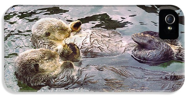Sea Otters Holding Hands IPhone 5 / 5s Case by BuffaloWorks Photography