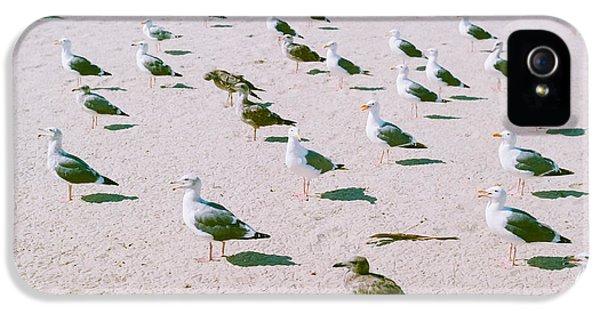 Seagulls  IPhone 5 / 5s Case by Ariane Moshayedi