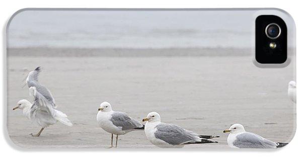 Seagulls On Foggy Beach IPhone 5 / 5s Case by Elena Elisseeva