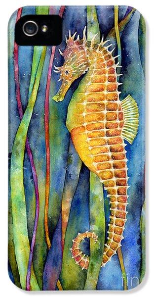 Seahorse iPhone 5 Case - Seahorse by Hailey E Herrera