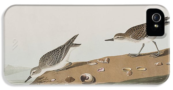 Semipalmated Sandpiper IPhone 5 / 5s Case by John James Audubon