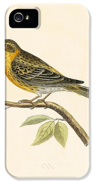Serin Finch IPhone 5 / 5s Case by English School