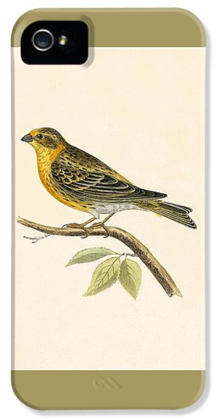 Serin Finch IPhone 5 Case by English School