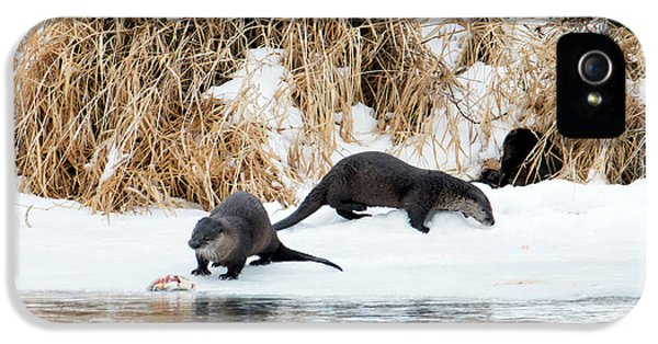 Sharing A Meal IPhone 5 / 5s Case by Mike Dawson