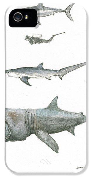 Hammerhead Shark iPhone 5 Case - Sharks In The Deep Ocean by Juan Bosco