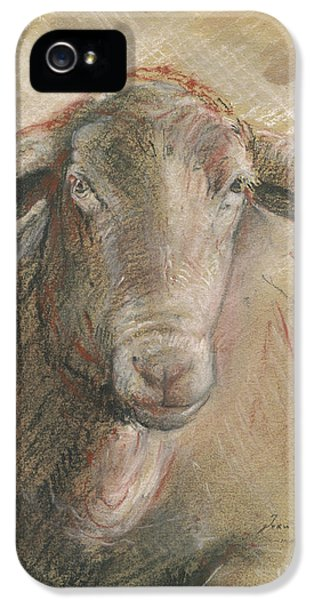 Sheep Head IPhone 5 / 5s Case by Juan Bosco