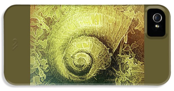 Shell Series 4 IPhone 5 Case by Marvin Spates