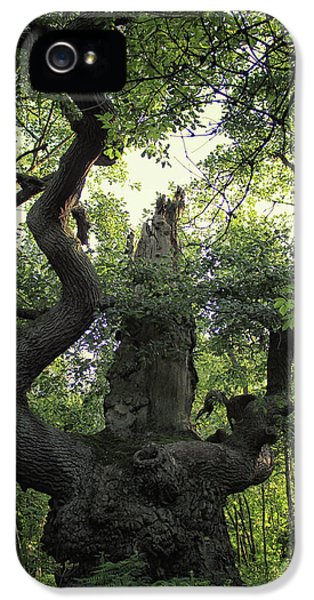 Sherwood Forest IPhone 5 Case by Martin Newman