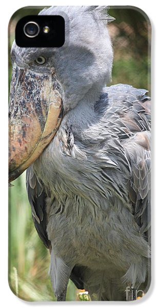 Shoebill Stork IPhone 5 Case by Carol Groenen