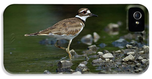 Killdeer iPhone 5 Case - Killdeer  by Douglas Stucky