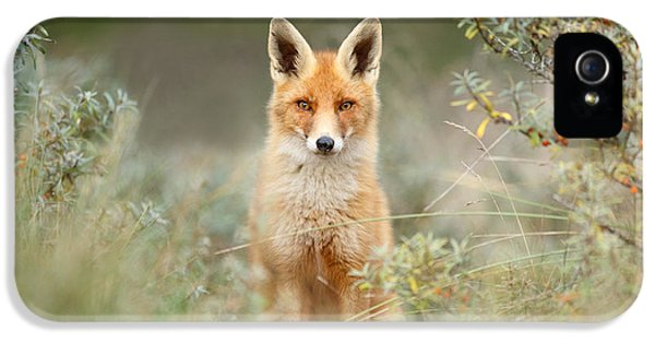 Shy Fox - Red Fox Hiding Behind The Bushes IPhone 5 Case