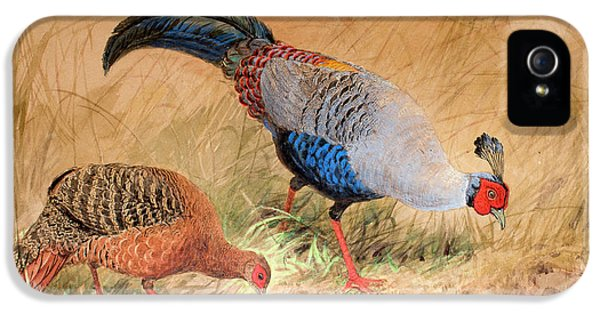 Siamese Pheasant  IPhone 5 Case by Joseph Wolf