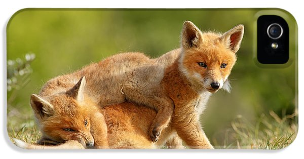 Sibbling Love - Playing Fox Cubs IPhone 5 Case by Roeselien Raimond