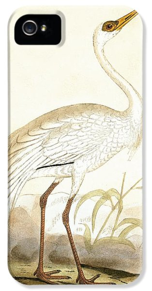 Siberian Crane IPhone 5 / 5s Case by English School