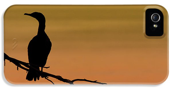 Silhouette Cormorant IPhone 5 Case by Sebastian Musial