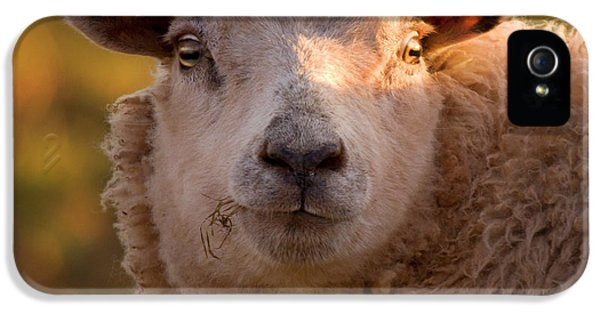 Sheep iPhone 5 Case - Silly Face by Angel Ciesniarska