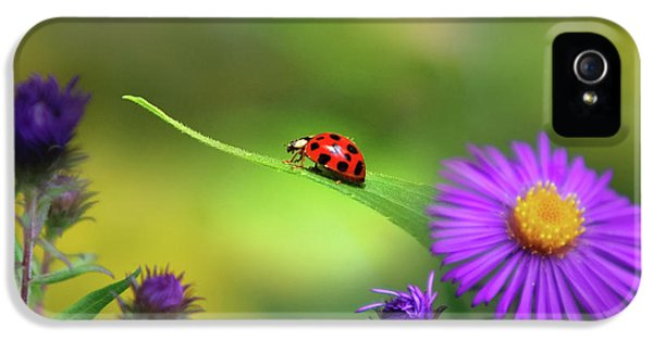 Ladybug iPhone 5 Case - Single In Search by Christina Rollo