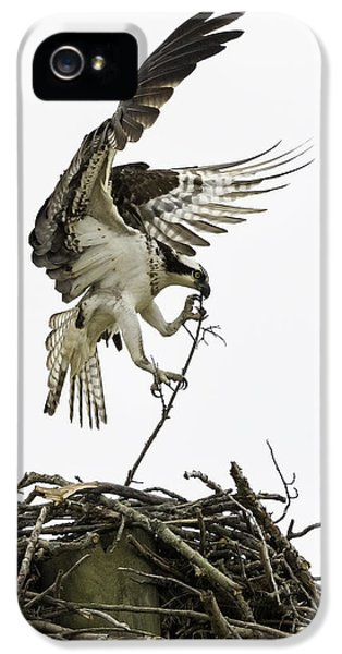 Osprey iPhone 5 Case - Sky Ballet by Everet Regal