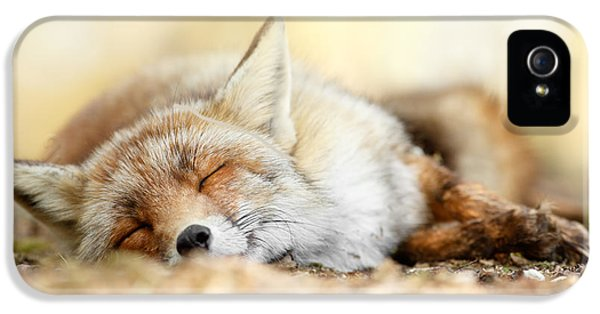 Sleeping Beauty -red Fox In Rest IPhone 5 Case