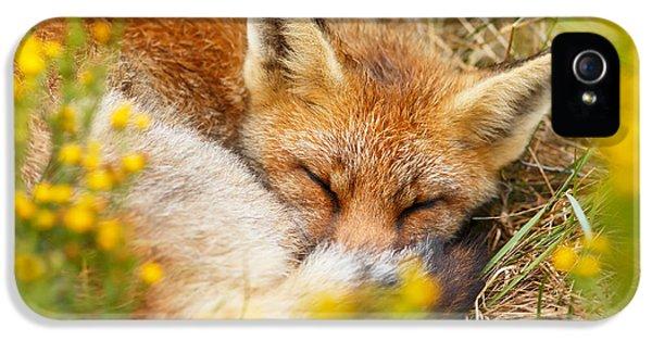 Sleeping Beauty - Sleeping Red Fox IPhone 5 Case