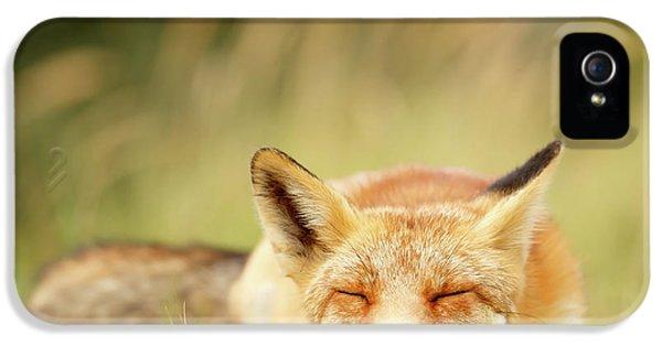 Sleepy Fox Is Sleepy IIi IPhone 5 Case
