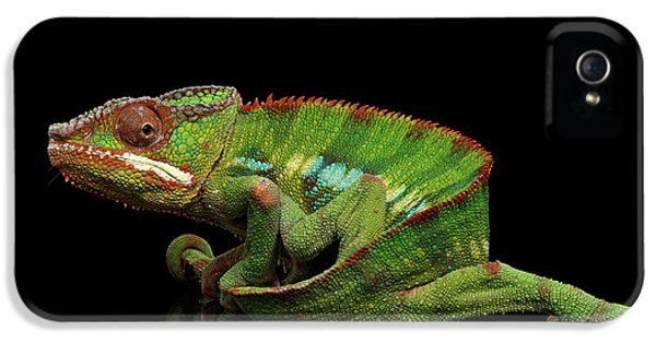 Sneaking Panther Chameleon, Reptile With Colorful Body On Black Mirror, Isolated Background IPhone 5 Case by Sergey Taran