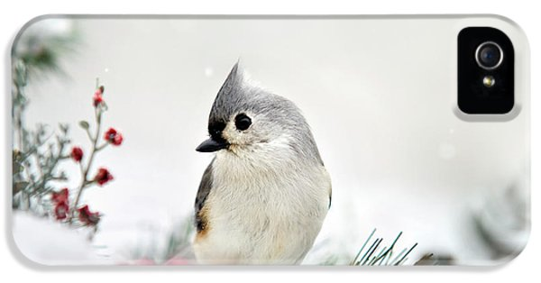 Titmouse iPhone 5 Case - Snow White Tufted Titmouse by Christina Rollo