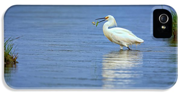 Snowy Egret At Dinner IPhone 5 / 5s Case by Rick Berk