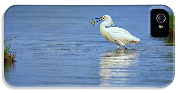 Snowy Egret At Dinner IPhone 5 Case