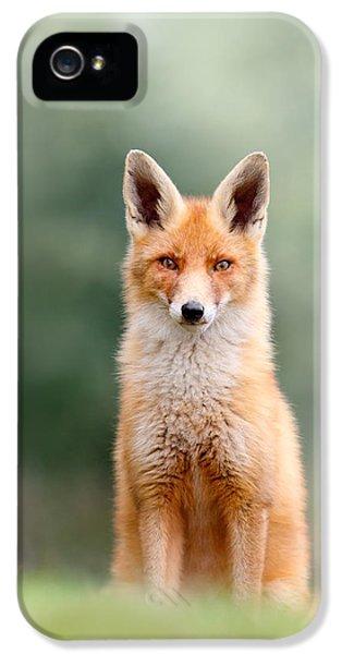 Softfox - Red Fox Sitting IPhone 5 Case