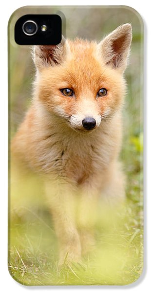 Softfox IPhone 5 Case by Roeselien Raimond