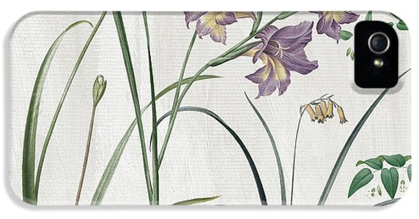 Softly Purple Crocus IPhone 5 Case by Mindy Sommers