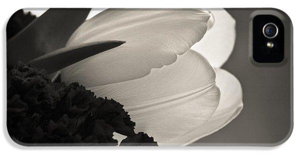Lit Tulip IPhone 5 Case