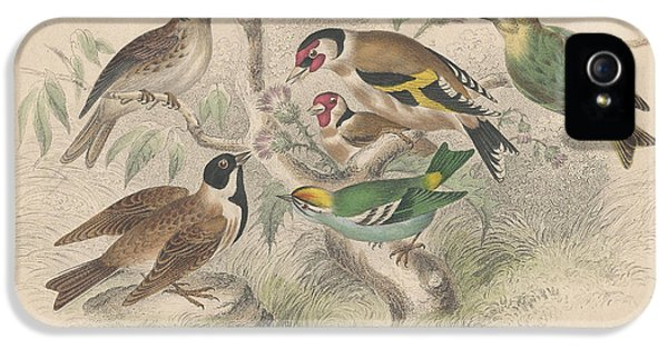 Songbirds IPhone 5 / 5s Case by Anton Oreshkin