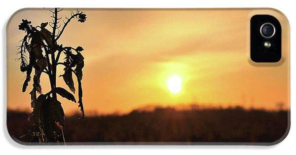 iPhone 5 Case - Sonnenuntergang by Scimitarable
