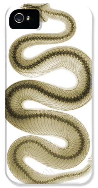 Southern Pacific Rattlesnake, X-ray IPhone 5 Case