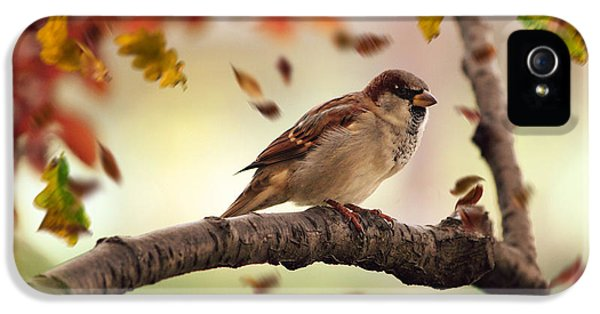 Sparrow And Falling Leaves IPhone 5 Case by Ericamaxine Price
