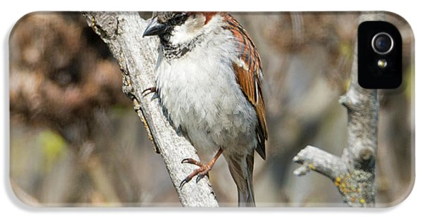 Sparrow Perch IPhone 5 Case by Mike Dawson