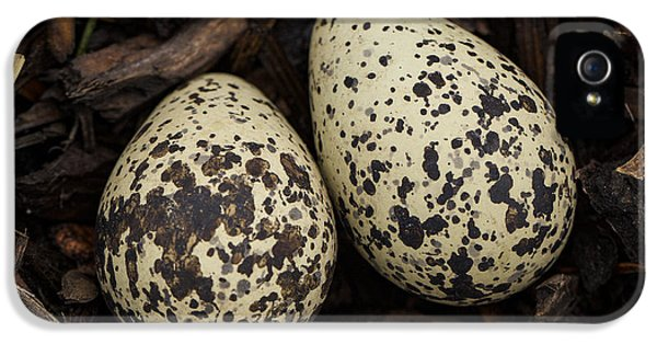 Speckled Killdeer Eggs By Jean Noren IPhone 5 Case by Jean Noren