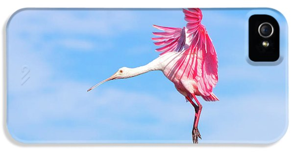Spoonbill Ballet IPhone 5 Case by Mark Andrew Thomas