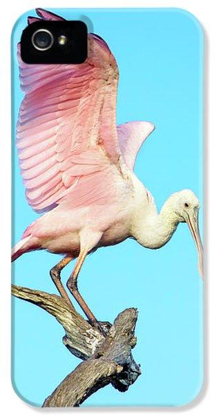 Spoonbill Flight IPhone 5 Case