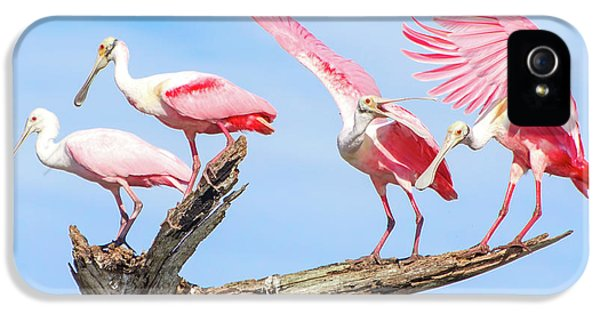 Spoonbill Party IPhone 5 Case by Mark Andrew Thomas