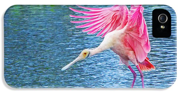 Spoonbill Splash IPhone 5 Case by Mark Andrew Thomas