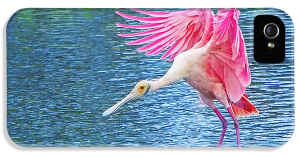 Spoonbill Splash IPhone 5 / 5s Case by Mark Andrew Thomas
