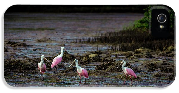 Ibis iPhone 5 Case - Spooning Party by Marvin Spates