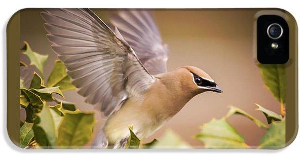 Cedar Waxing iPhone 5 Case - Spread Your Wings Cedar Waxwing  by Terry DeLuco
