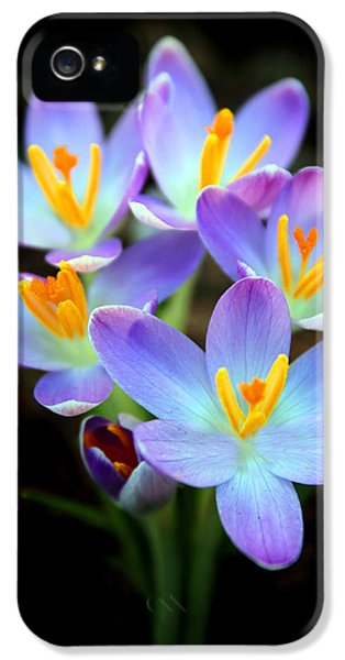 IPhone 5 Case featuring the photograph Spring Crocus by Jessica Jenney